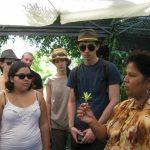 Visite guidée avec Mme Roulof de la plantation de vanille
