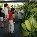 Visite de la plantation de vanille Roulof à la Réunion