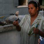 Visite guidée de la plantation de vanille avec Mme Roulof