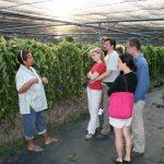 Visite guidée au milieu de la plantation de vanille Roulof